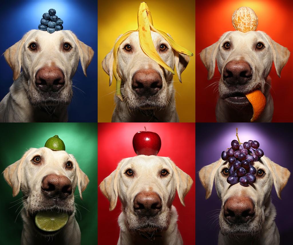 frutas que cachorro não pode comer