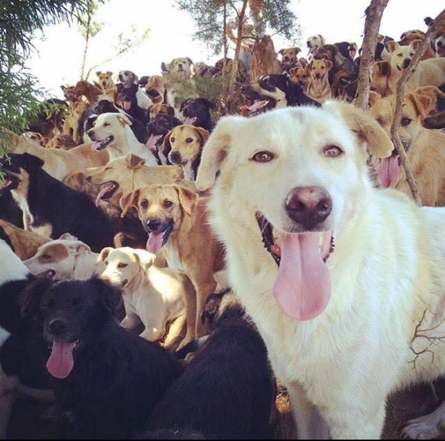 santuário de cachorros