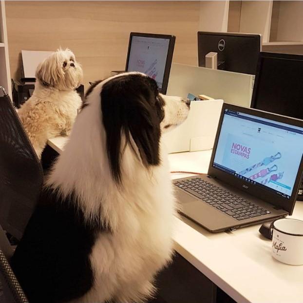 levar cachorro pro trabalho