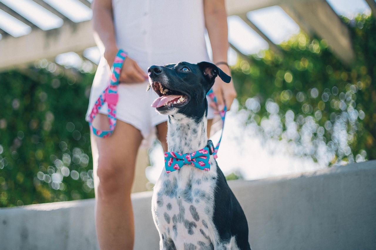 novas estampas da zee.dog - gravata para cachorro
