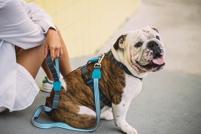 Novas Estampas Zee.Dog - Peitoral para cachorro Helsinki