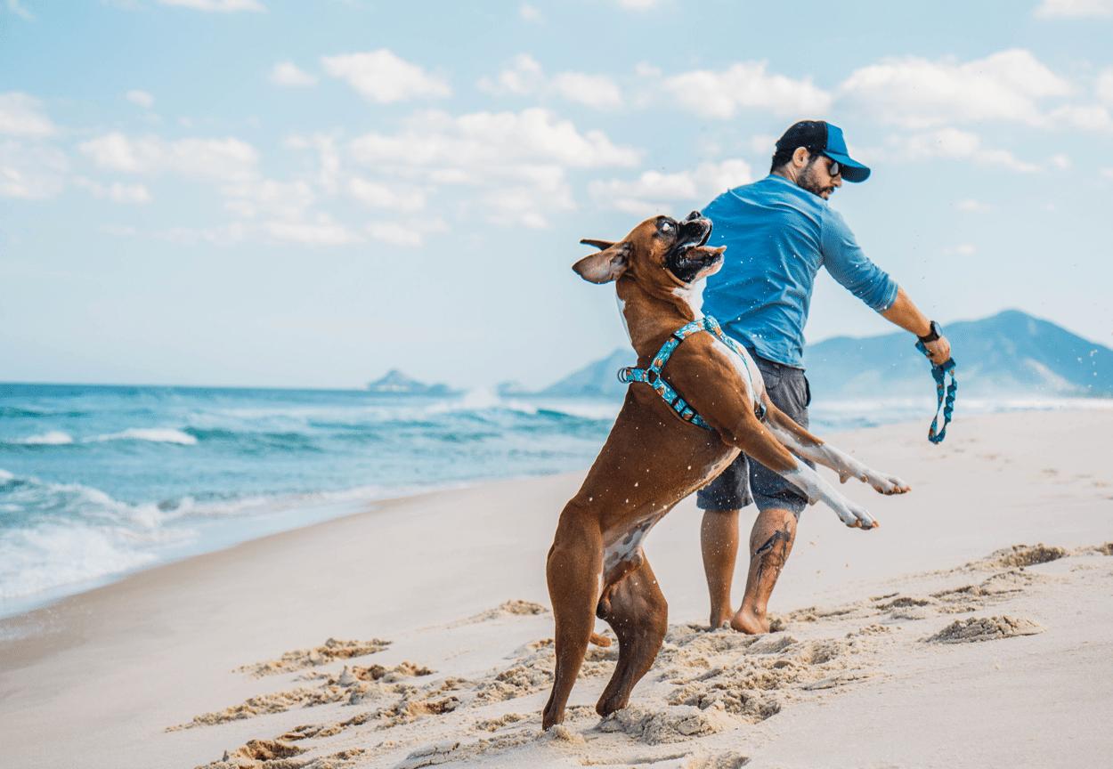 final de semana com seu cachorro
