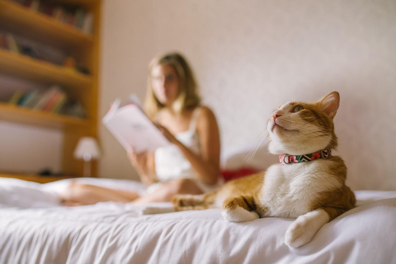 Coleira para gatos Mahalo | Zee.Cat