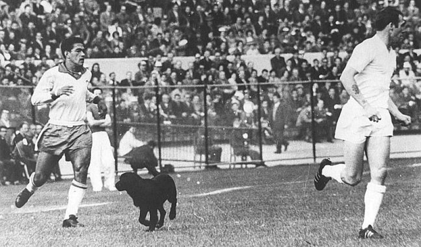 Cachorro Invade o Campo