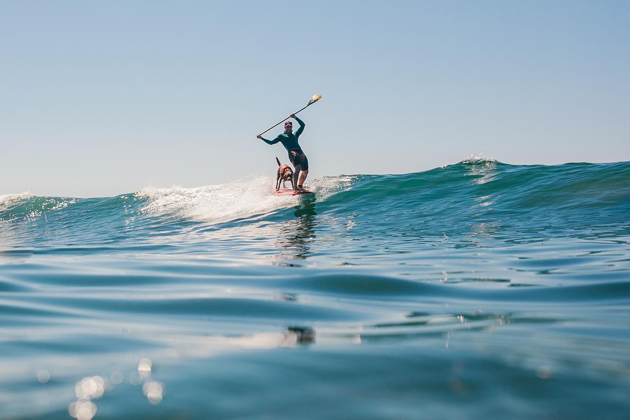 O CÃO SURFISTA