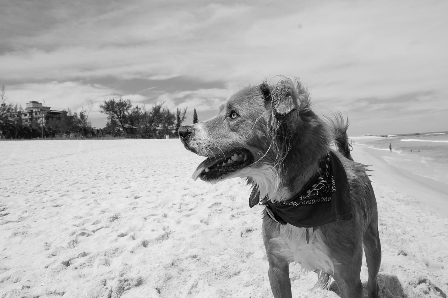 a origem do nosso nome: Zee.Dog