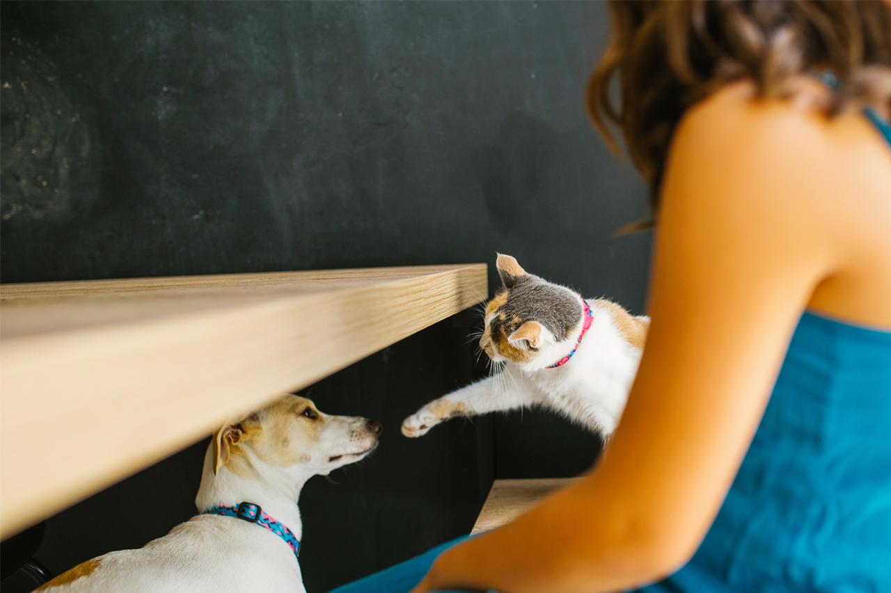 diferenças de personalidade entre pessoas de cães e gatos