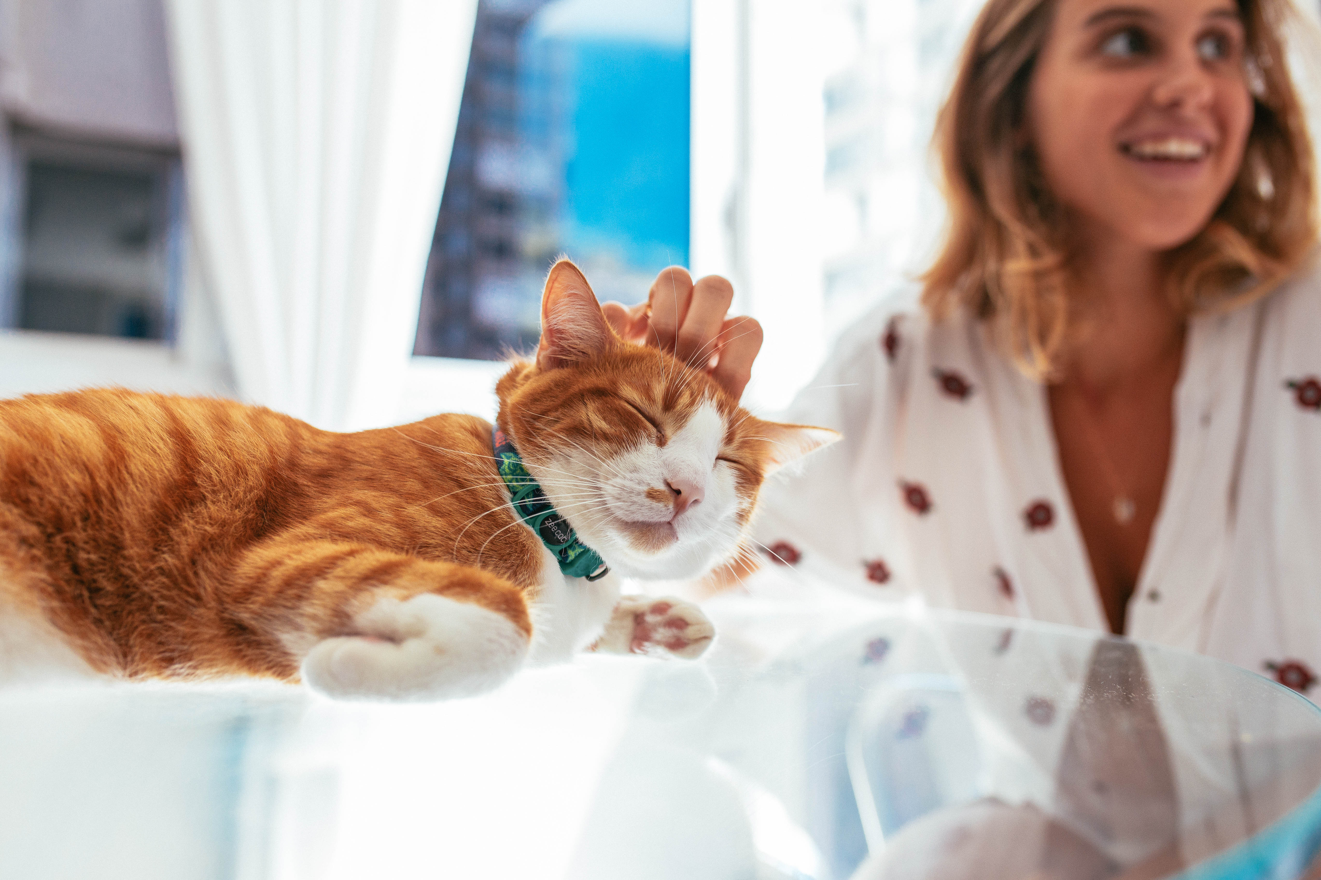 o-que-significa-o-ronronar-do-gato