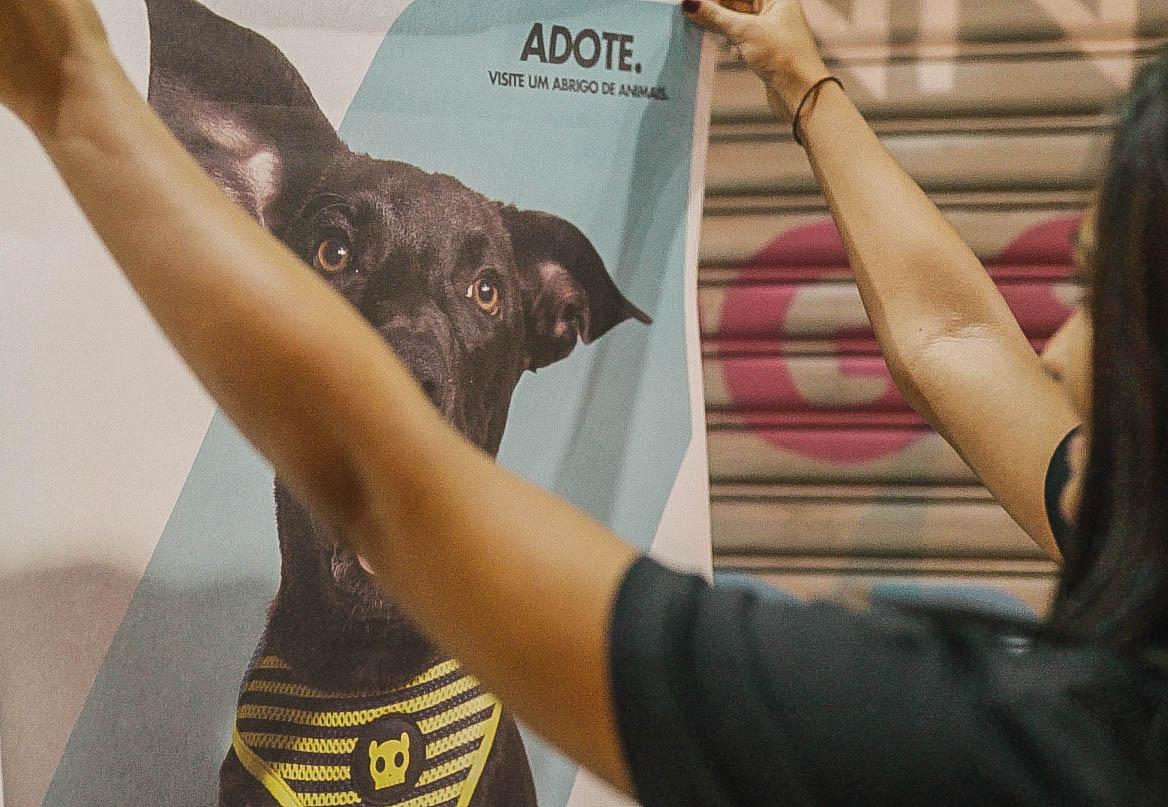 campanha de adoção de cachorros
