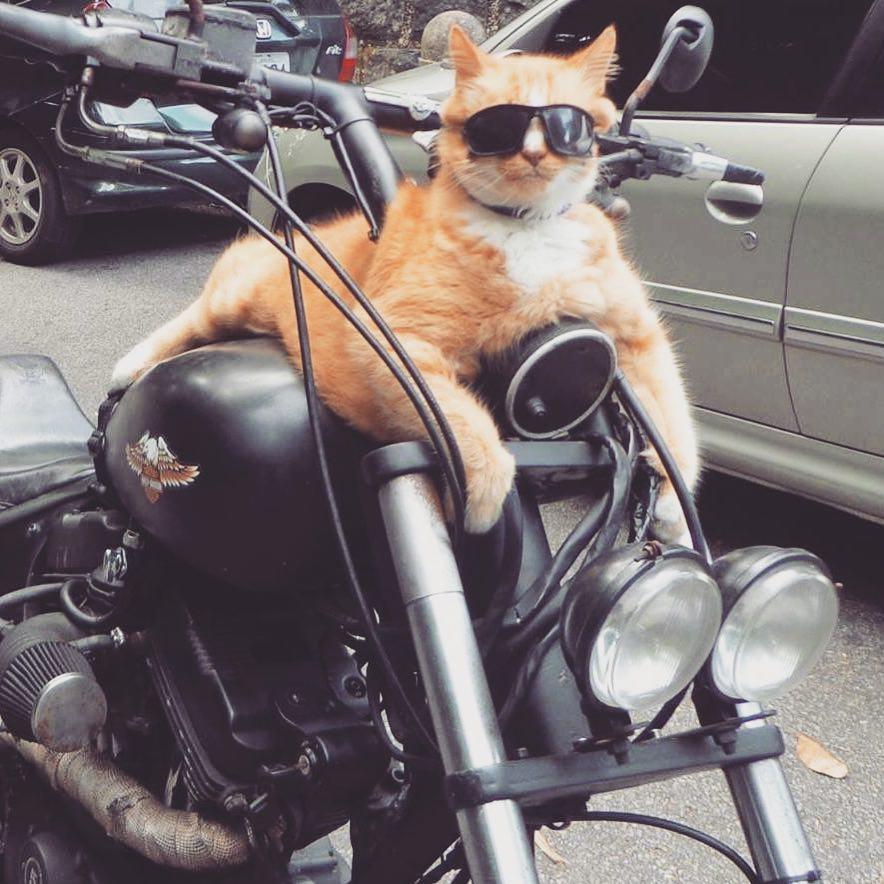 gato-no-instagram-chiquinho