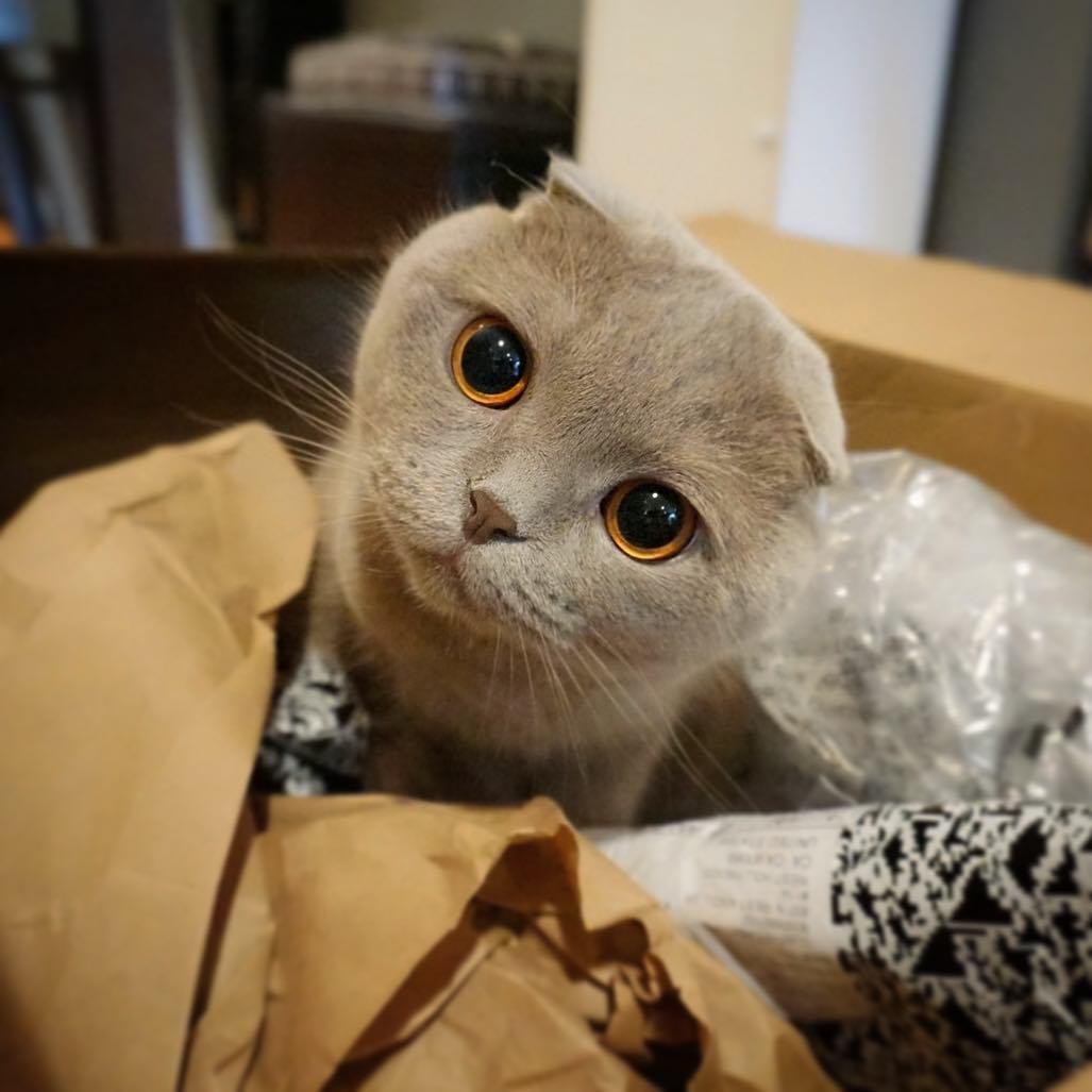 gato-no-instagram-milla-the-cat