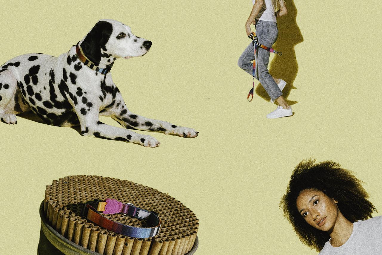 coleira para cachorro prisma