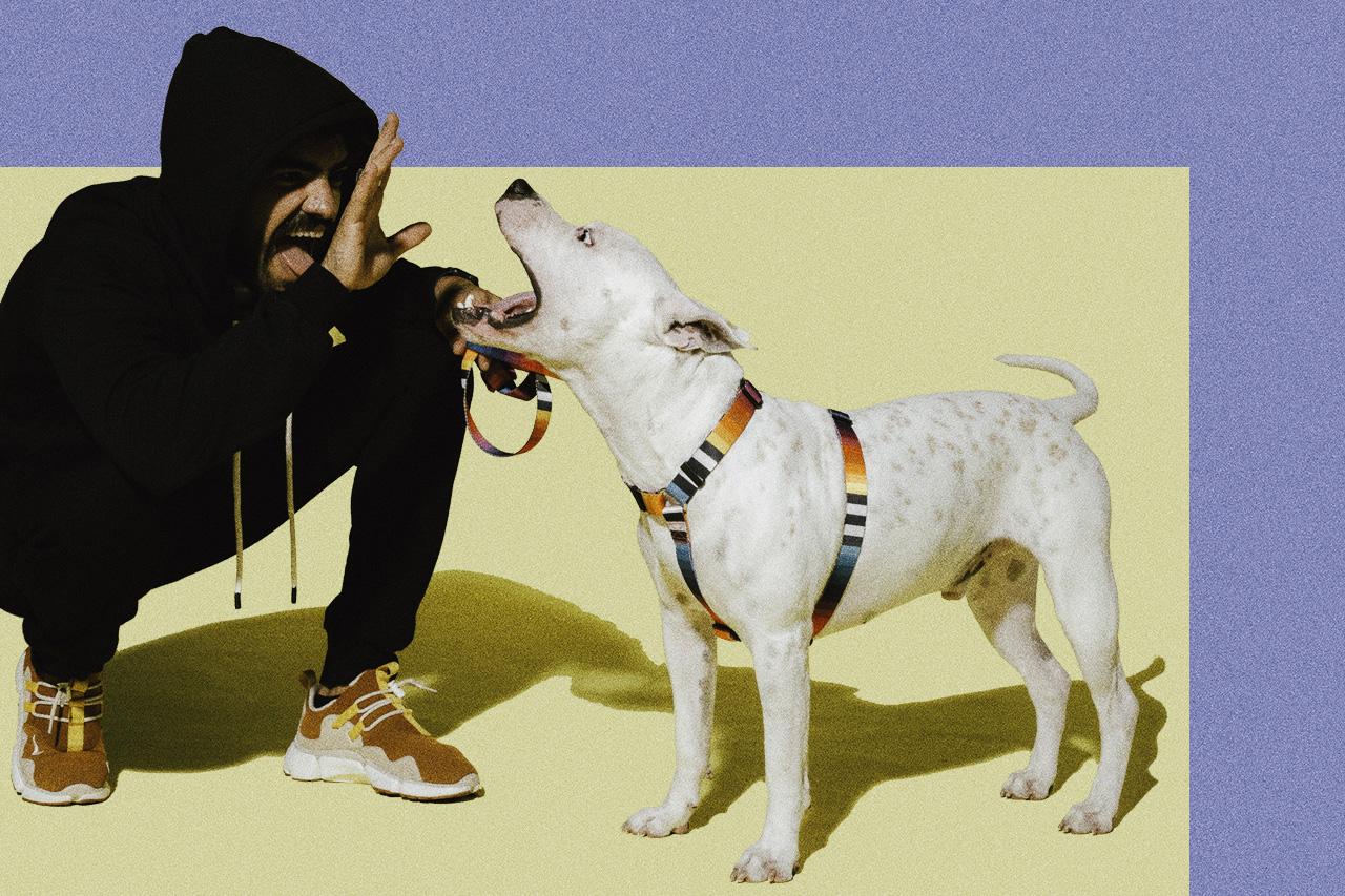 peitoral para cachorro