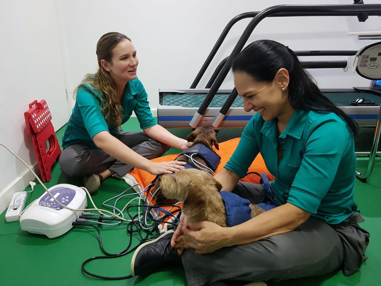 fisioterapia-veterinaria-como-funciona