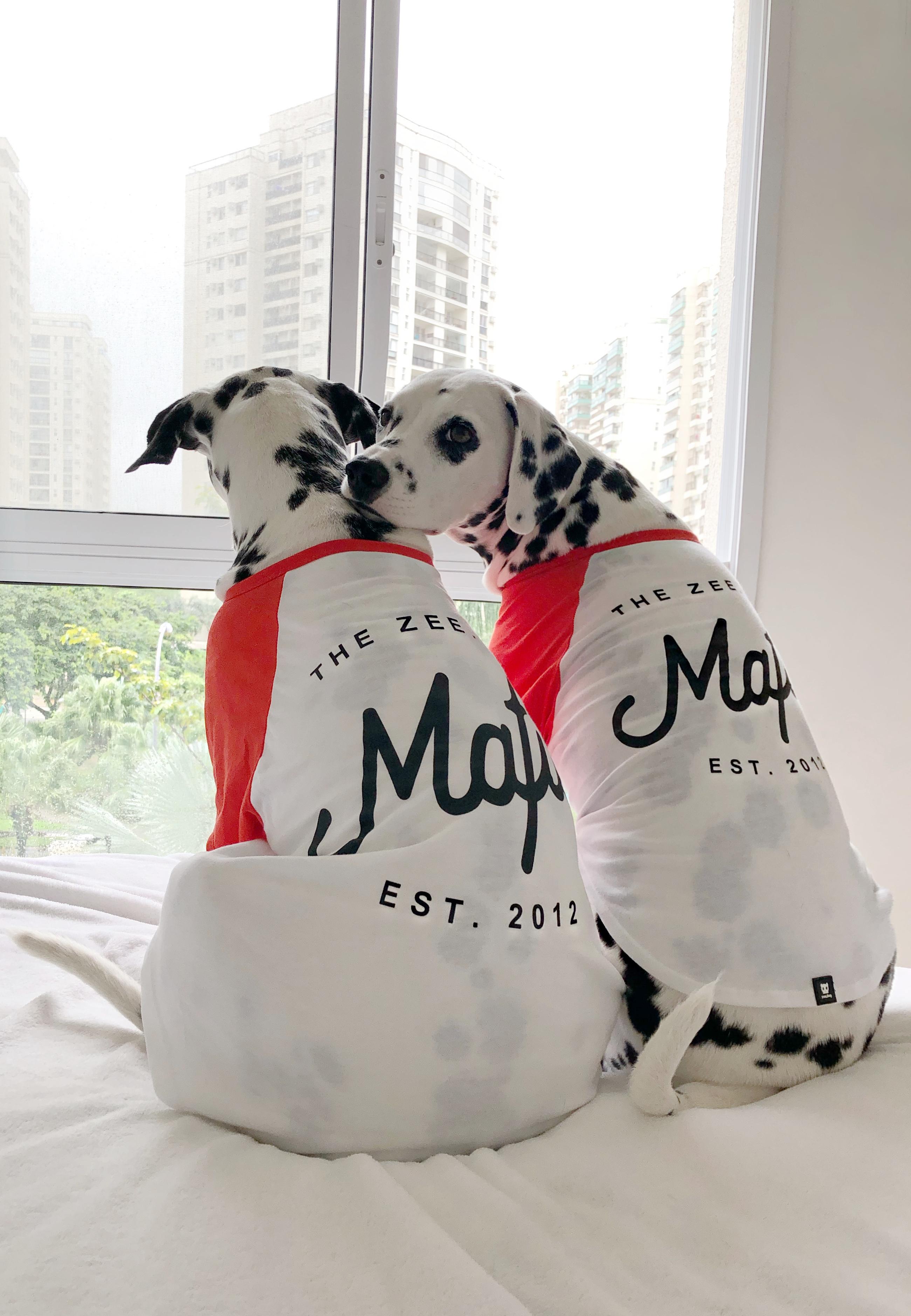 roupa para cachorros