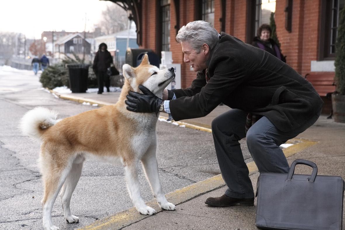 5 filmes de cachorro que mostram a parceria com seu dono