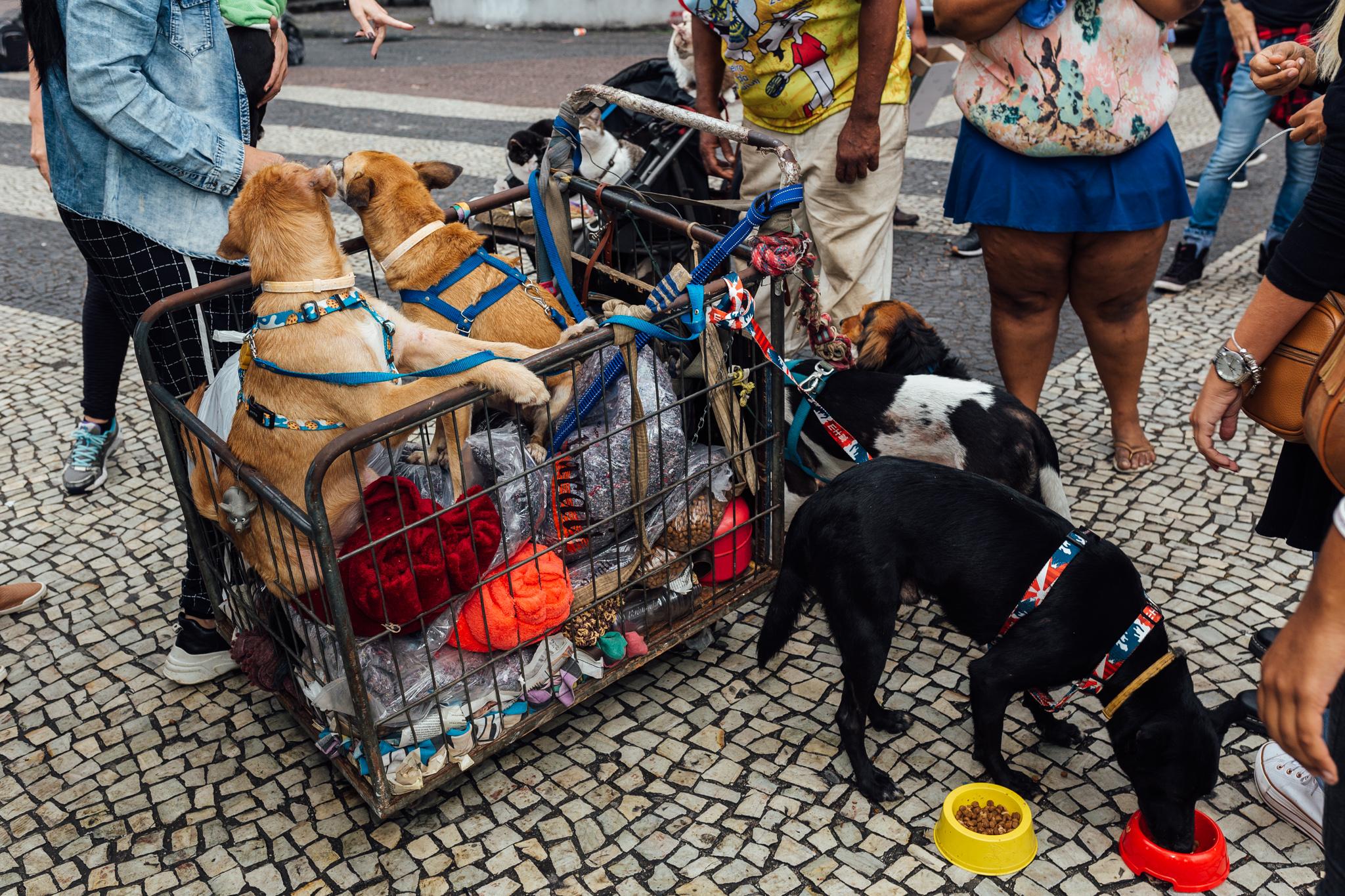 Moradores de rua e seus cães