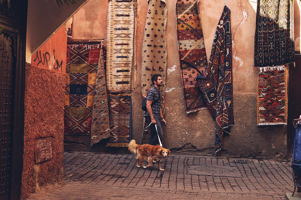coleção-Zee.Dog-Marrakesh_COVER