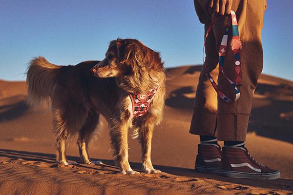 coleção-Zee.Dog-Marrakesh_guia-para-cachorros
